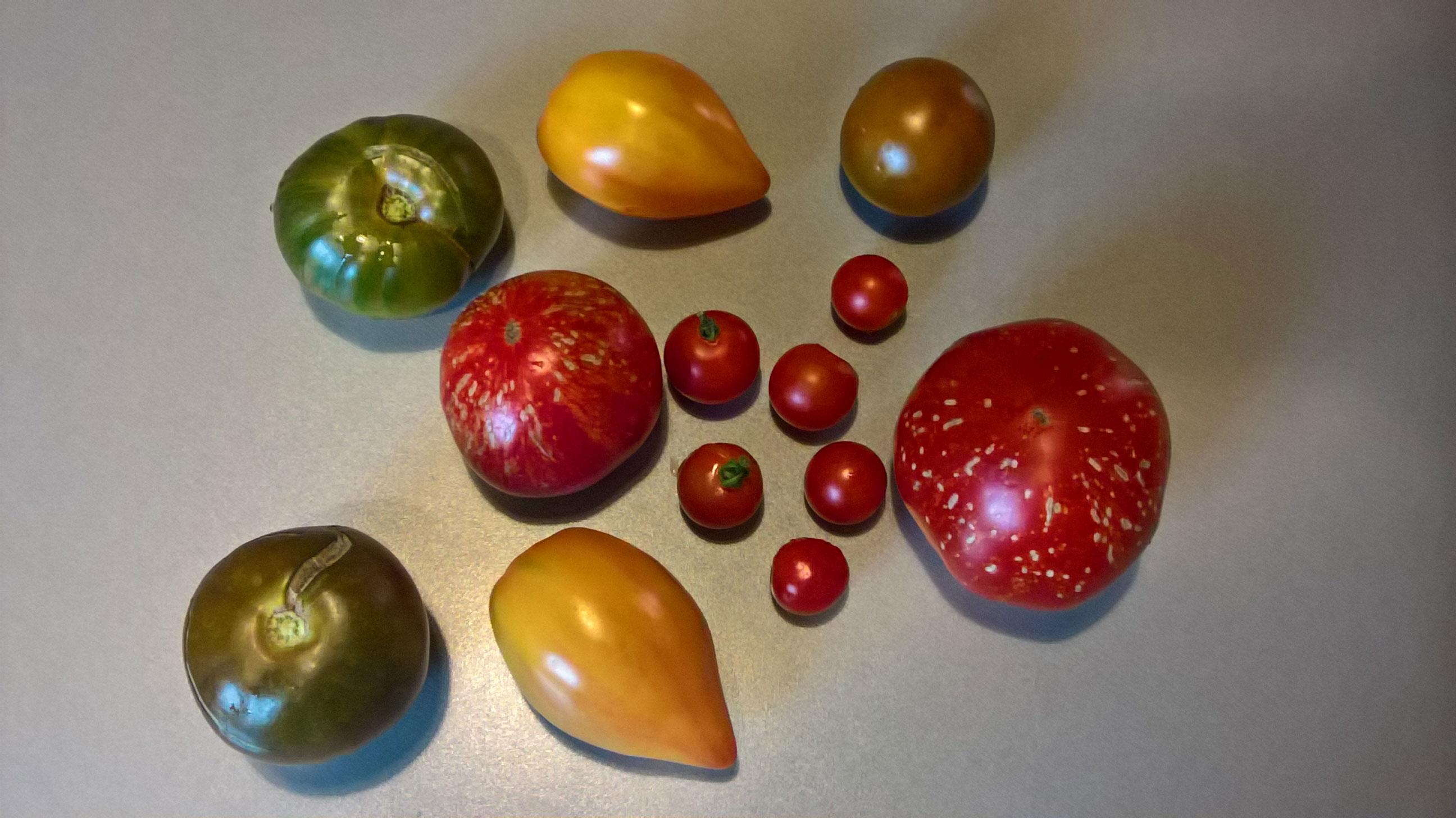 Différentes sortes de tomates